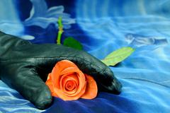 Pink rose with black glove on a blue background, art, decoration - stock photo