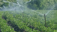 Agriculture, potato field watering, zoom out HD video Stock Footage