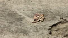 Hermit Crab Walking Close Up Stock Footage