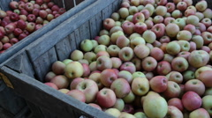 Apples Picked From Orcahrd Stock Footage