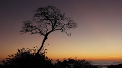 Howler Monkeys in Tree at Dusk Stock Footage