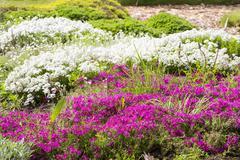 Stock Photo of Wild flowers in Minsk a botanical garden, Belarus