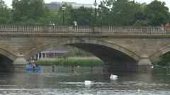 Swans swimming and washing near the Serpentine bridge in London Stock Footage