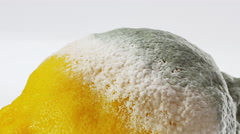 Rotten lemon covered with mold rotating over white Stock Footage