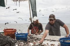 Commercial fishermen sorting fish Stock Photos
