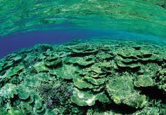 Sea fauna - stock photo