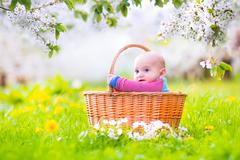 Happy baby in a basket in a blooming apple tree Stock Photos