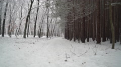 Walking down snowy trail along edge of pine forest.  Ronin Stabilized Shot. Stock Footage