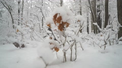 Beautiful snow covered forest being revealed as camera moves Stock Footage