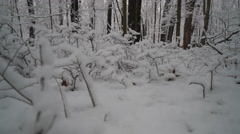 Low angle view of beautiful snow covered plants in forest edge Stock Footage