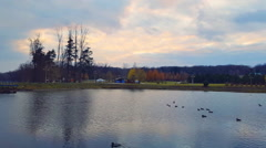 Lake in the autumn park with floating ducks at sunset Stock Footage