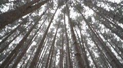 Pan down from canopy and walking forward through pine forest as snow falls - stock footage