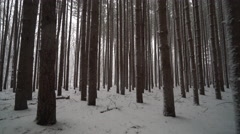 Quickly moving through forest of tall pines covered in freshly fallen snow - stock footage