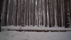 Beautiful forest of huge pine trees covered in snow as camera pans up from Stock Footage