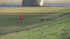 Woman in Red is Walking With a German Sheperd Dog by a Green Meadow at the Stock Footage