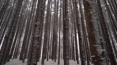Cinematic shot moving through snowy forest of tall pines Stock Footage