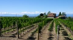 Friaul vineyard estate Stock Footage