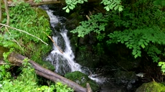 Small waterfall river Steinbach in Harz Mountains Stock Footage