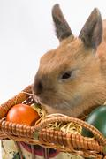 Easter bunny and basket with Easter eggs Stock Photos