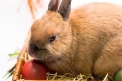 Easter bunny and basket with Easter eggs - stock photo