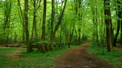 Beech forest and hiking track Stock Footage