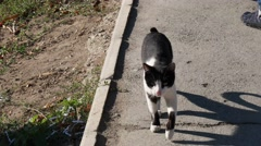 Stray feral cat walking outdoors to camera Stock Footage