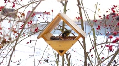 Birds eating in starling Stock Footage