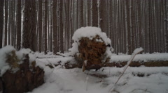 Winter forest crane shot as snow falls between the tall pines Stock Footage