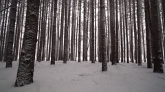 Low angle cinematic move through fresh snow in forest of tall pines Stock Footage