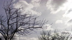 Clouds roll by autumn branches that have lost their leaves Stock Footage