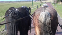 Two horses pulling carriage through field Stock Footage