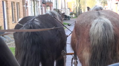 Horses pulling carriage through street Stock Footage