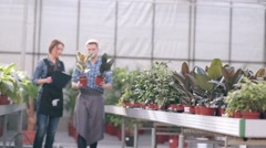 Manager and florist talking in greenhouse - stock footage