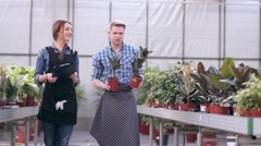 Greenhouse coworkers are busy with work - stock footage