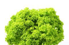 Lettuce Lollo Bionda - green continental curly lettuce Stock Photos