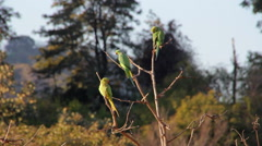 Parrots on a tree on a summer morning Stock Footage