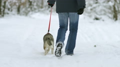The man walk in the snowy forest with a Husky. Real time capture Stock Footage