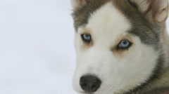 Dog on a snowy background. Real time capture Stock Footage