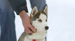 The man stroke a dog on a snowy background. Real time capture - stock footage