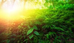 Warm yellow sunlight shines through leaves and tree branches inside in tropic Stock Photos