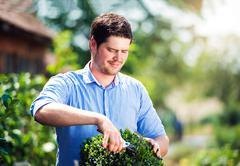Handsome gardener pruning little boxwood bush, green sunny natur - stock photo