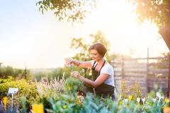Young gardener cutting little flower plant, green sunny nature - stock photo