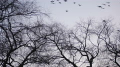 Birds flying and tree in foreground Stock Footage