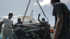 Unloading Tuna At Dock From The Fishing Ship Stock Footage