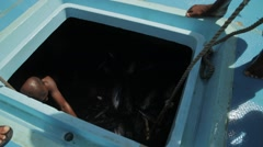 Fishermen Lifted Fresh Tuna From The Hold Stock Footage