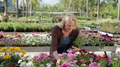 Mature woman choosing flowers in garden centre - stock footage