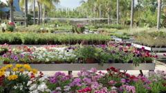 Mature woman choosing flowers in garden centre Stock Footage
