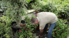 Senior man digging in garden Stock Footage