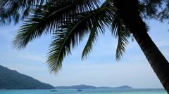 Palm tree, Perhentian Besar,  Perhentian Islands, Malaysia Stock Footage