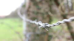 Close Up Barbed Wire Fence & Wooden Post Covered With Ivy Hand Held Stock Footage